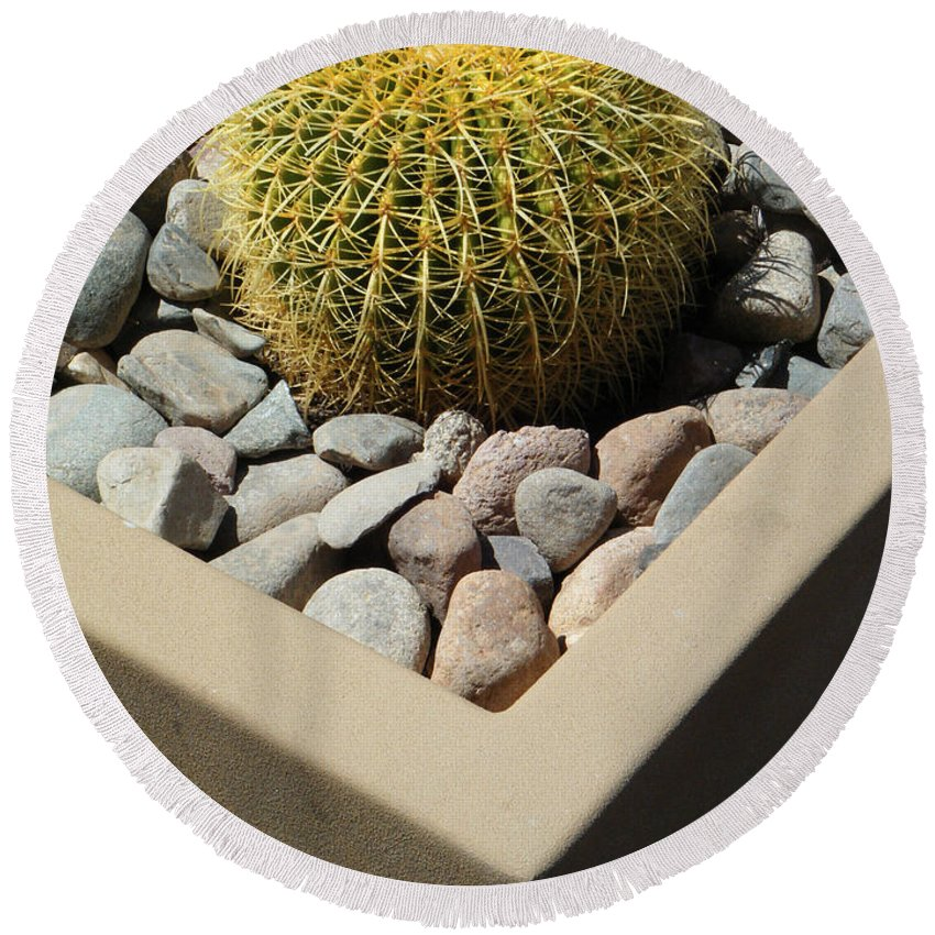 Arizona Round Beach Towel featuring the photograph Small Barrel Cactus In Planter by Tamara Kulish
