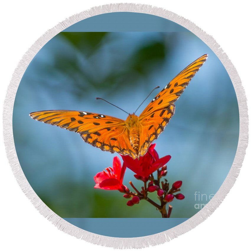 Butterfly Round Beach Towel featuring the photograph Smell The Flowers by Stephen Whalen