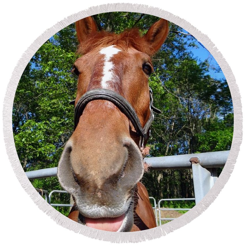 Horses Round Beach Towel featuring the photograph Smile by Ed Weidman