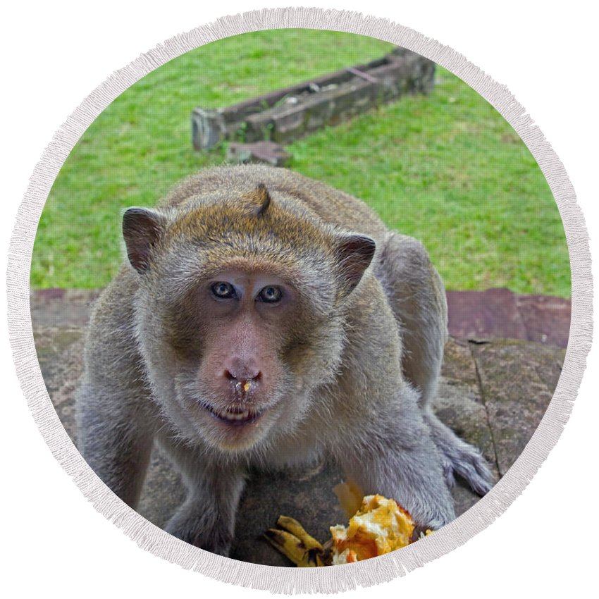 Monkey Round Beach Towel featuring the photograph Smile For The Camera by David Freuthal