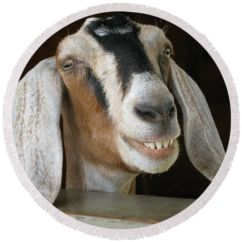Goat Round Beach Towel featuring the photograph Smile Pretty by Ann Horn