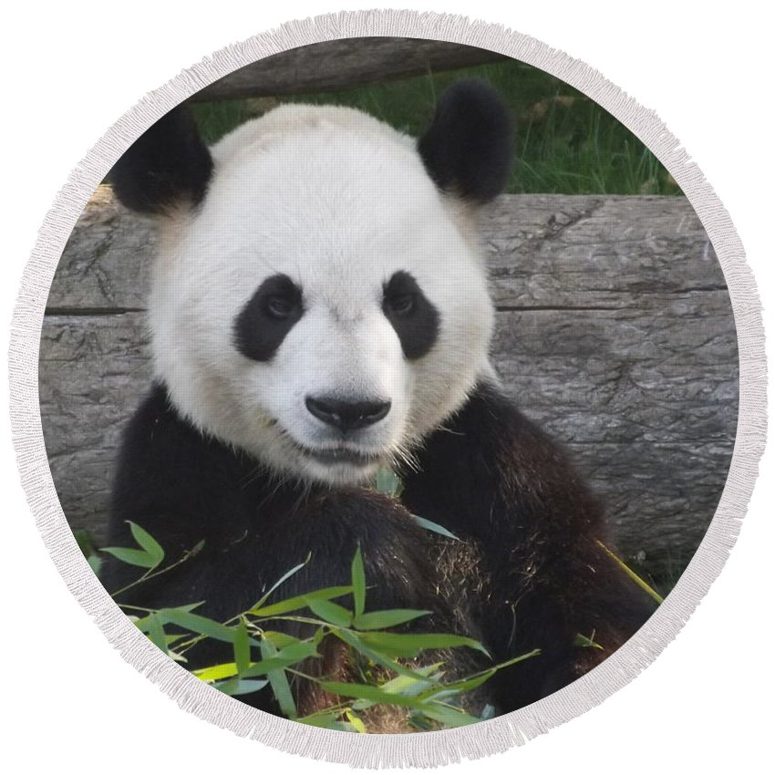 Nature Round Beach Towel featuring the photograph Smiling Giant Panda by Lingfai Leung