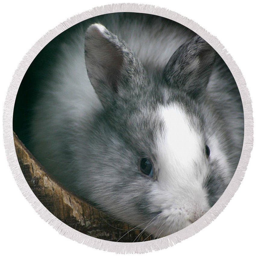 Rabbit Round Beach Towel featuring the photograph Smokey by Living Color Photography Lorraine Lynch