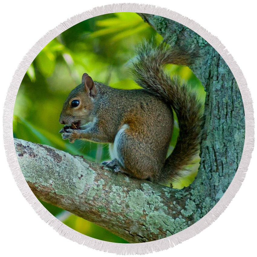 Squirrel Round Beach Towel featuring the photograph Snacking Squirrel by Stephen Whalen