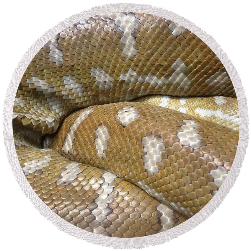 Python Round Beach Towel featuring the photograph Snake by FL collection