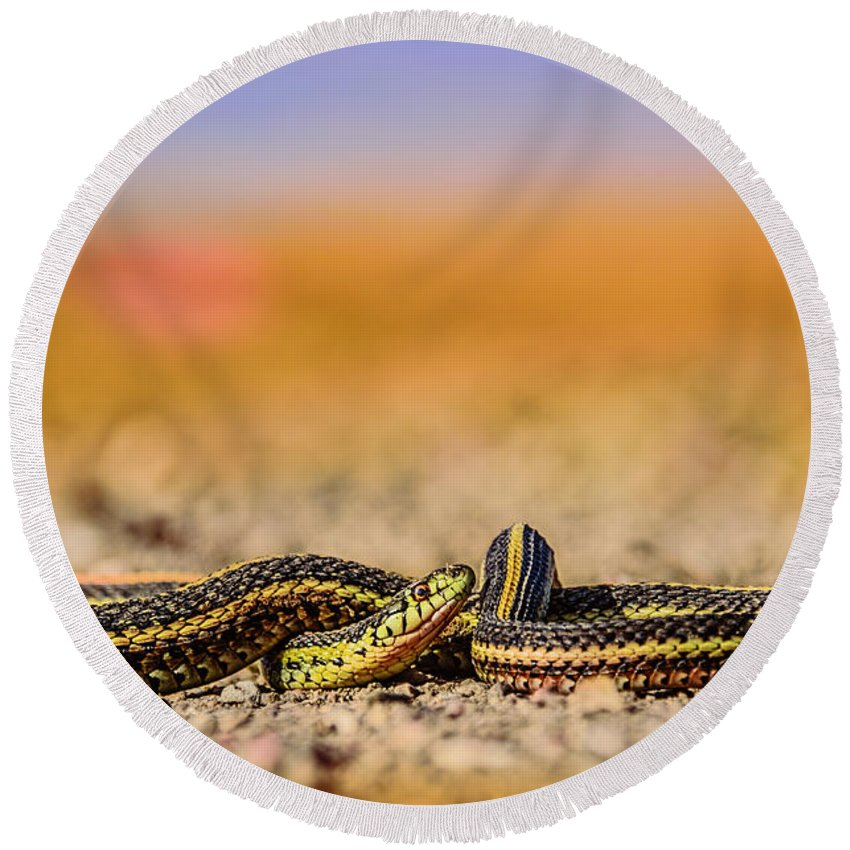 Snake Round Beach Towel featuring the photograph Snake by Viktor Birkus