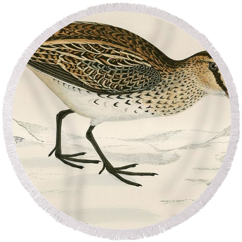 Birds Round Beach Towel featuring the photograph Snipe by Beverley R. Morris
