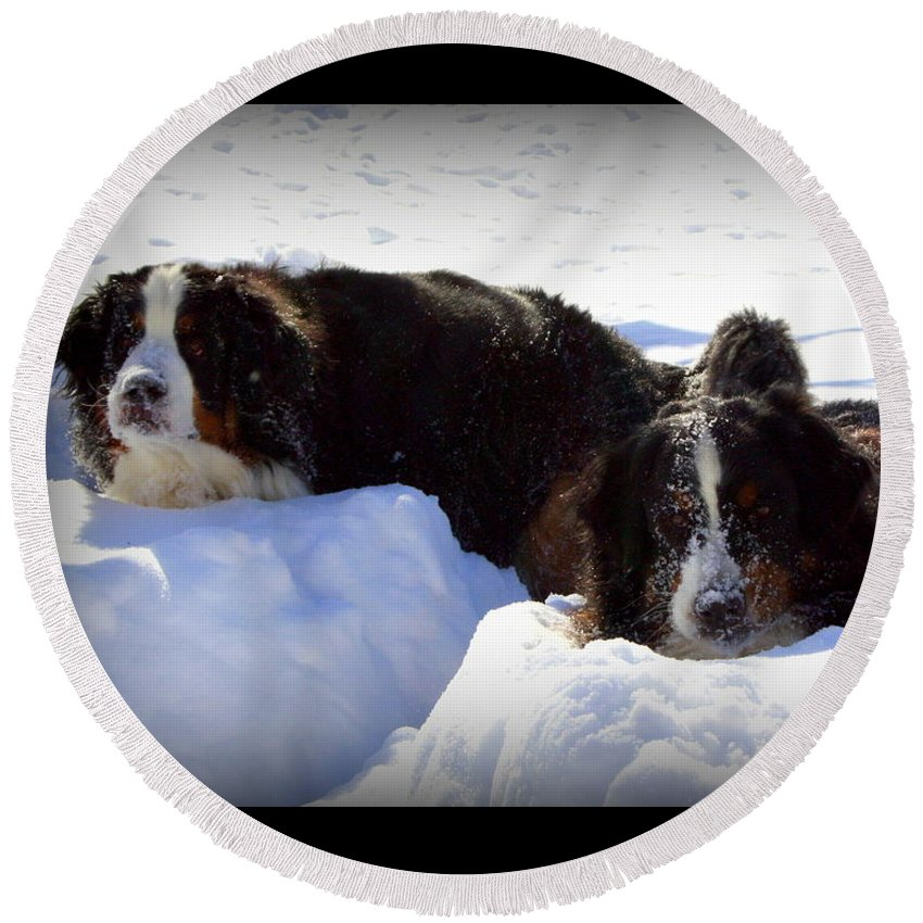 Snow Yummy Round Beach Towel featuring the photograph Snow Yummy by Patti Whitten