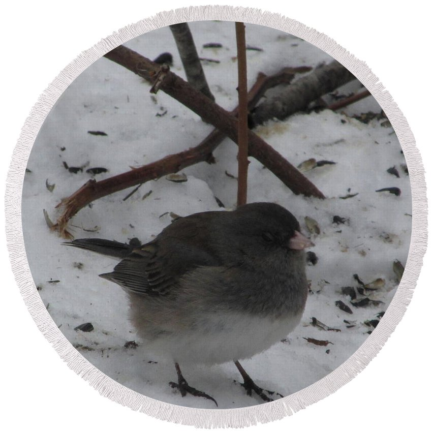 Snow Finch Winter Birds Snow Birds Avian Diversity Song Birds Of North American Little Gray Bird Small Gray Bird Ornithology Round Beach Towel featuring the photograph Snow Finch by Joshua Bales