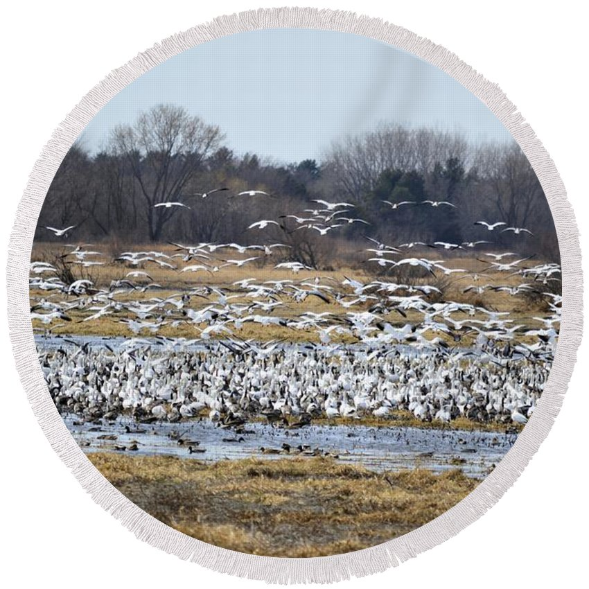 Geese Round Beach Towel featuring the photograph Snow Geese by Bonfire Photography