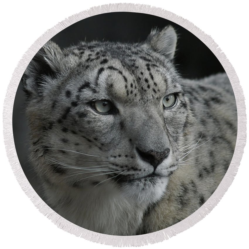 Animals Round Beach Towel featuring the photograph Snow Leopard 15 by Ernie Echols