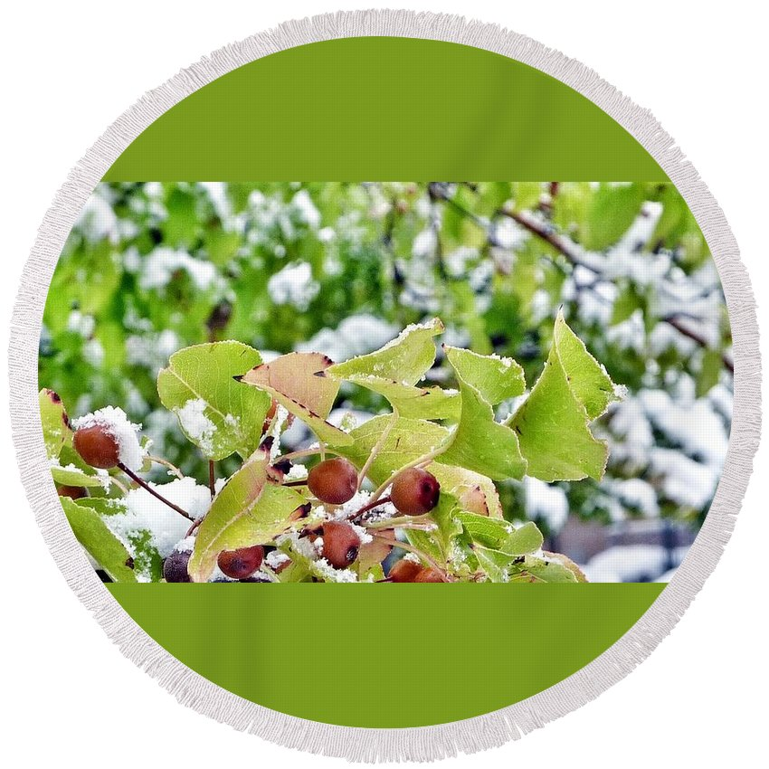 Snow Covered Green Leaves With Red Berries. Round Beach Towel featuring the photograph Snow On Green Leaves With Red Berries by Susan Garren