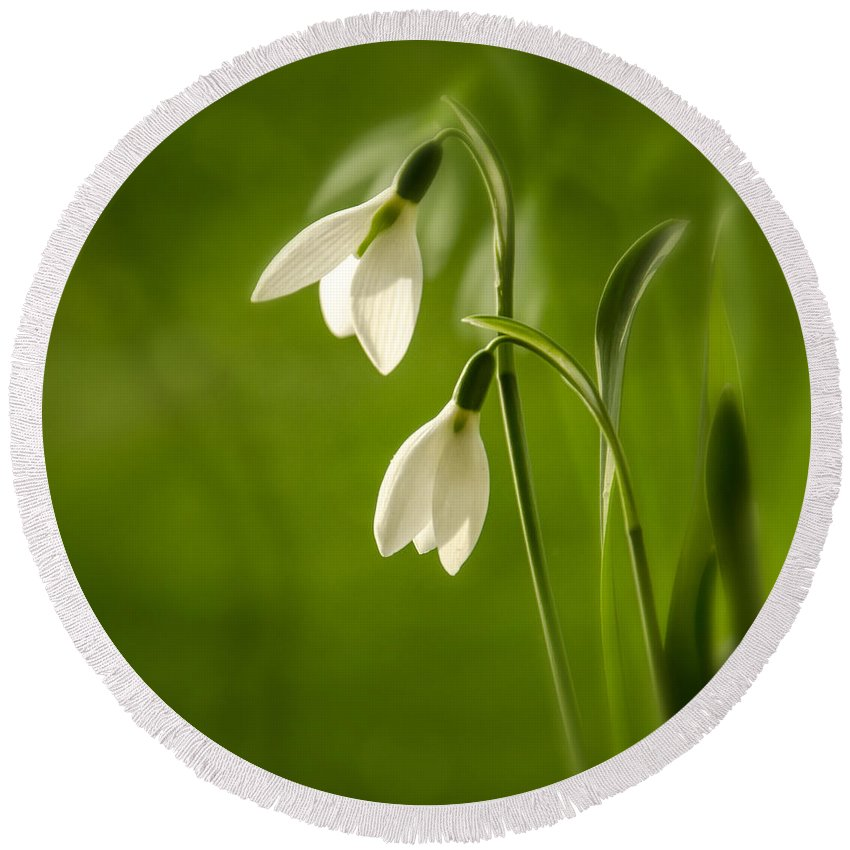 Background Round Beach Towel featuring the photograph Snowdrop by TouTouke A Y