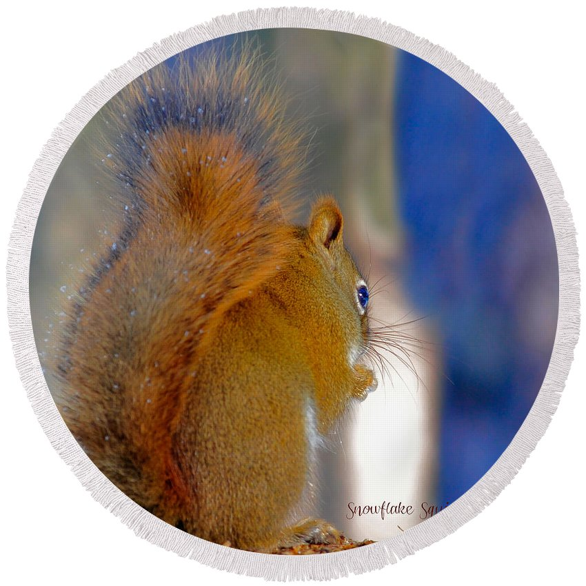 Squirrel Round Beach Towel featuring the photograph Snowflake Squirrel At Sunset by Amanda Smith