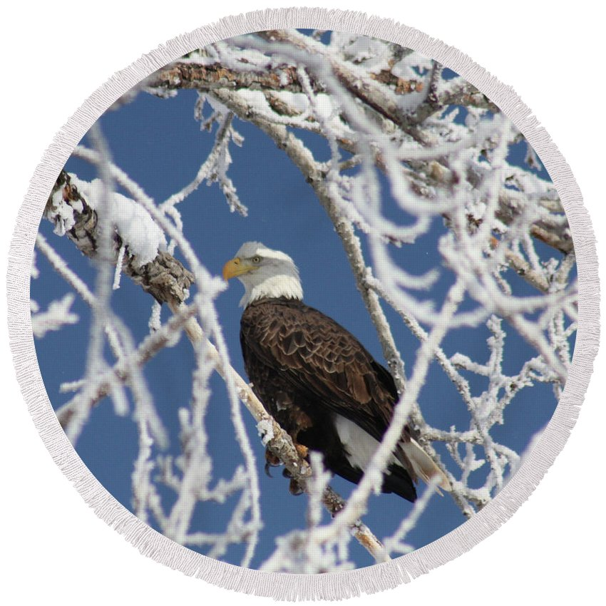 Bald Eagle Round Beach Towel featuring the photograph Snowy Bald Eagle by Brandi Maher