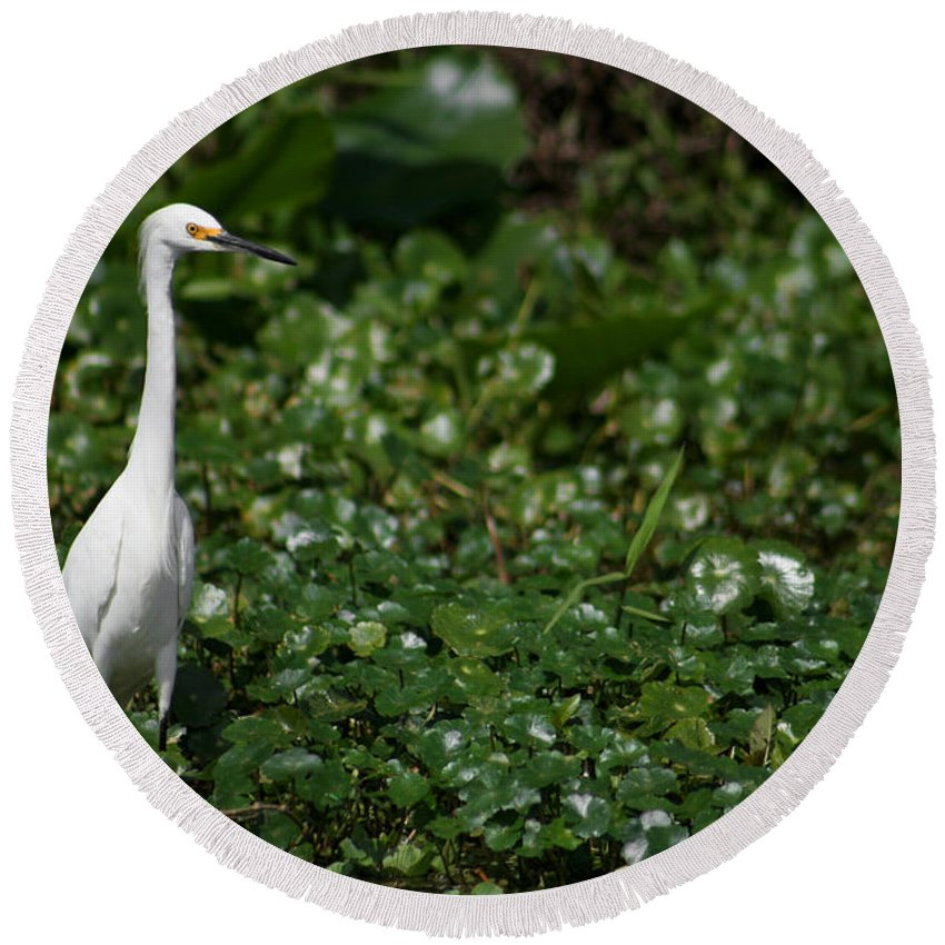 Snowy Egret Round Beach Towel featuring the photograph Snowy Egret 3 by Allan Lovell