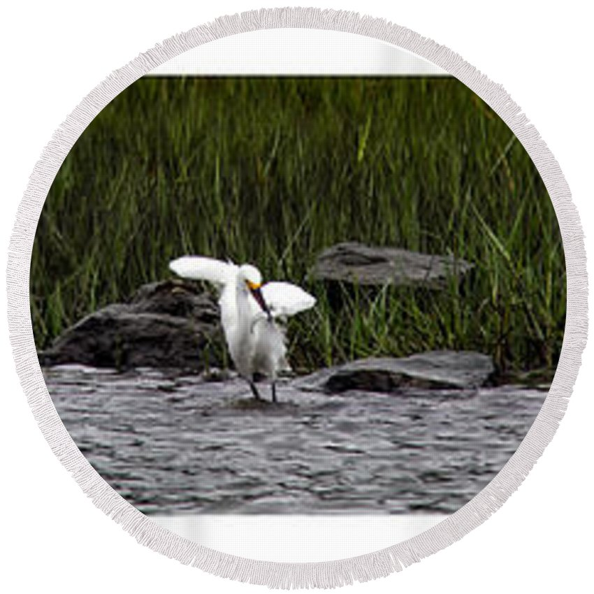 Snowy Egret Round Beach Towel featuring the photograph Snowy Egret Fishing by Debby Richards
