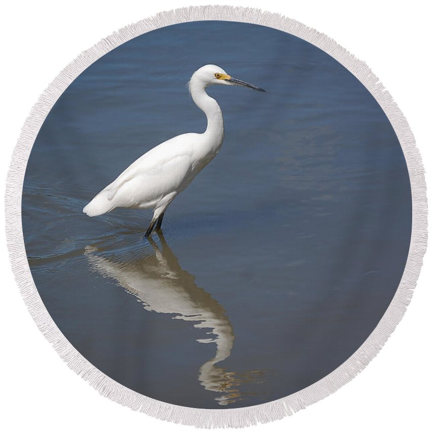 Snow Round Beach Towel featuring the photograph Snowy Egret by Leticia Latocki