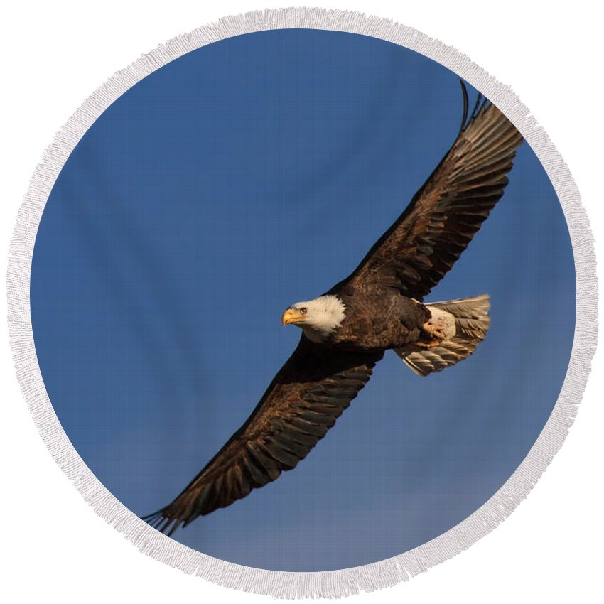 Bald Eagle Round Beach Towel featuring the photograph Soaring Bald Eagle by Beth Sargent