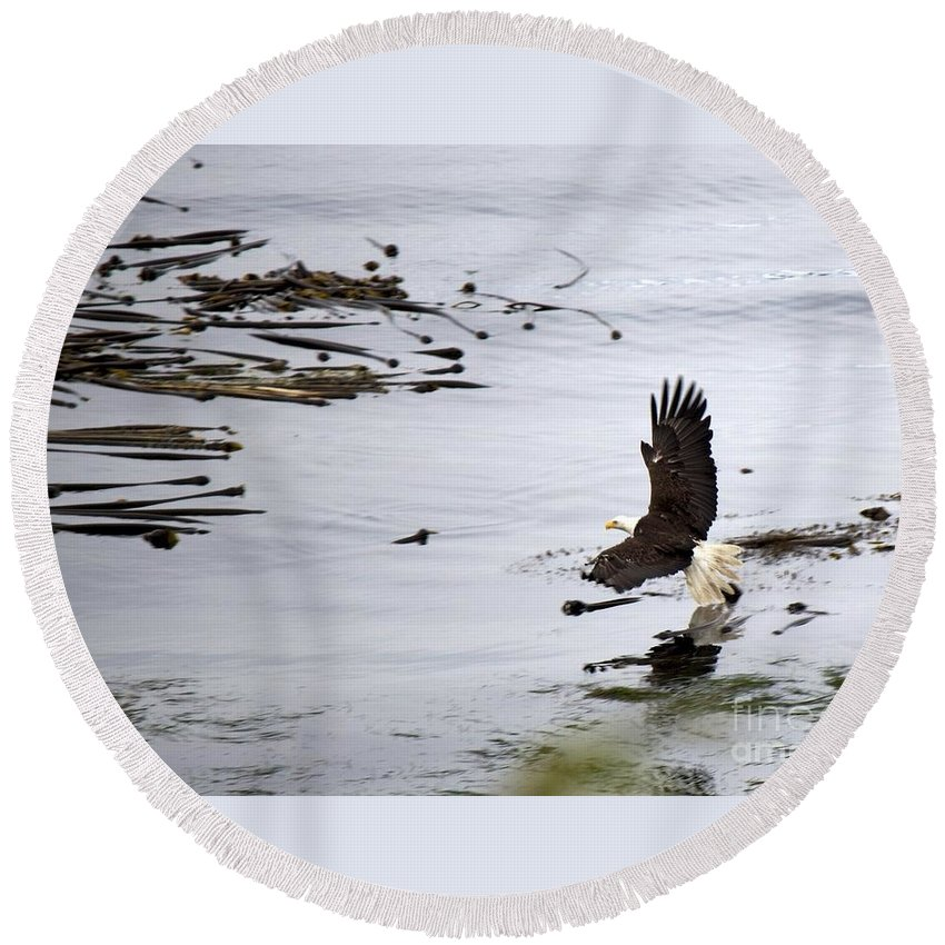Soaring Round Beach Towel featuring the photograph Soaring Eagle by Alanna DPhoto