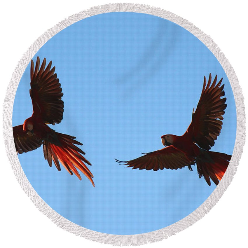 Scarlet Macaws Round Beach Towel featuring the photograph Soaring by Lorraine Baum