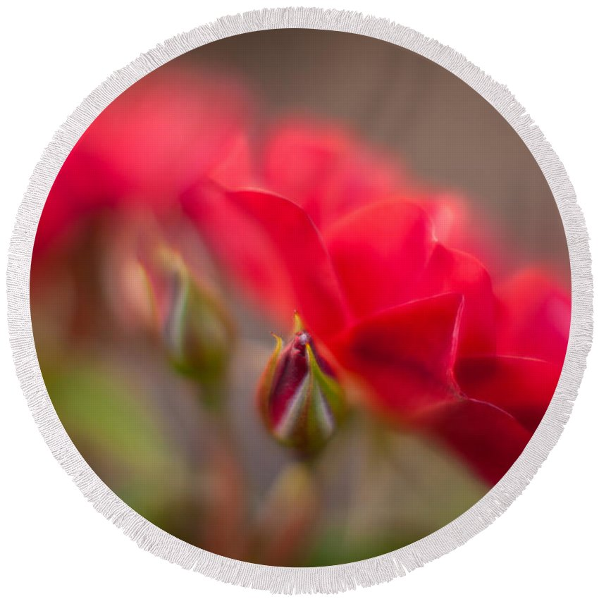 Flower Round Beach Towel featuring the photograph Soaring Red Rosebud by Mike Reid