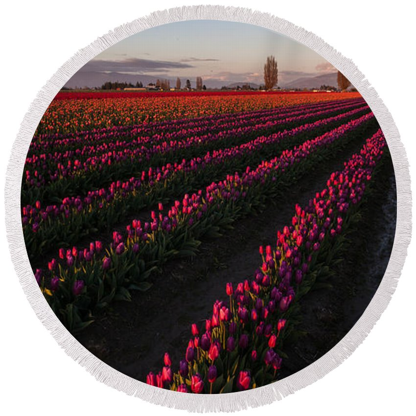 Skagit Tulip Festival Round Beach Towel featuring the photograph Soaring Spring Colors In Skagit by Mike Reid