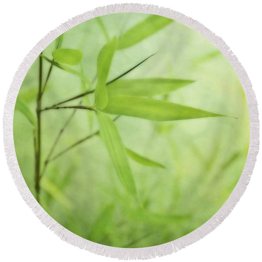 Green Round Beach Towel featuring the photograph Soft Bamboo by Priska Wettstein