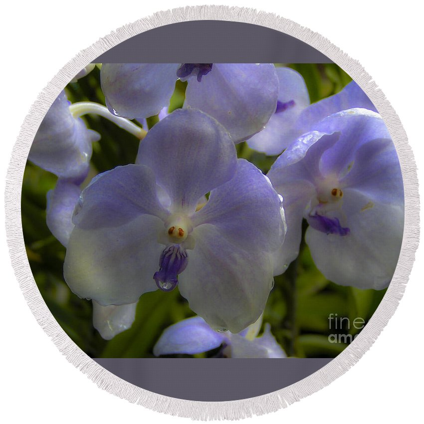 Lovejoy Round Beach Towel featuring the photograph Soft Purple Orchids by Lovejoy Creations