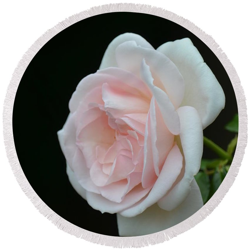 Softly Pink - Rose Round Beach Towel featuring the photograph Softly Pink - Rose by Maria Urso