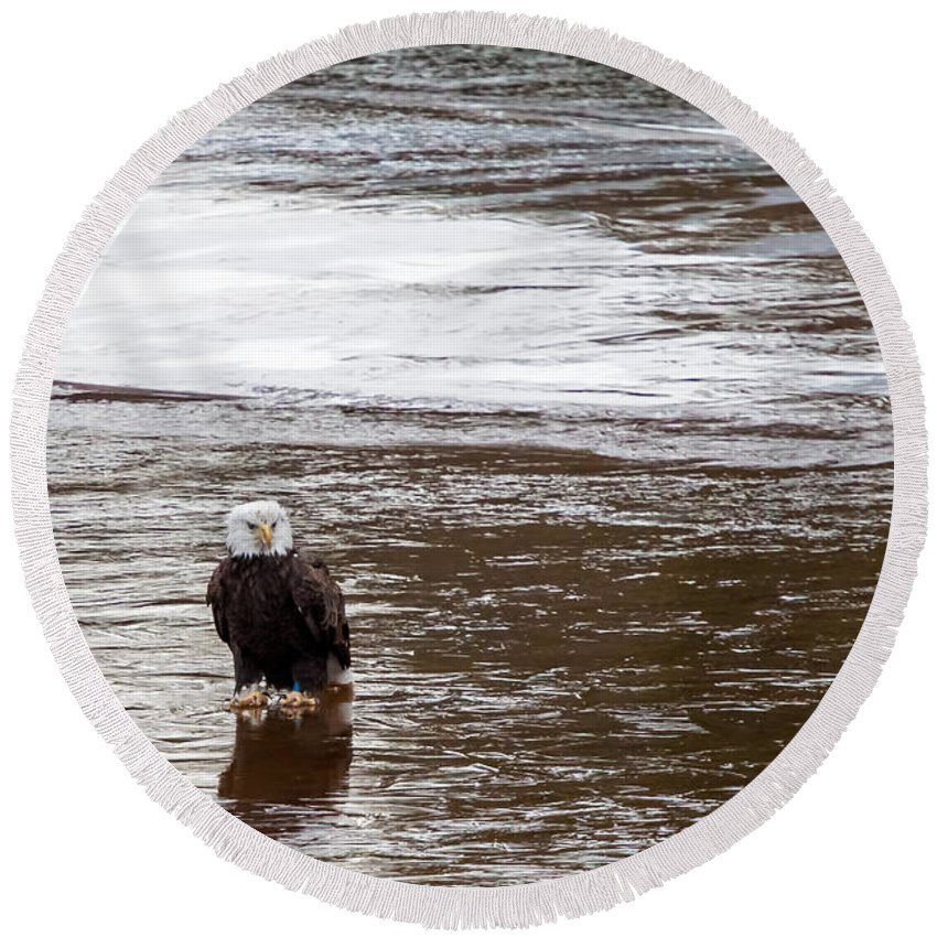 Birds Round Beach Towel featuring the photograph Solitary Eagle by Eleanor Abramson