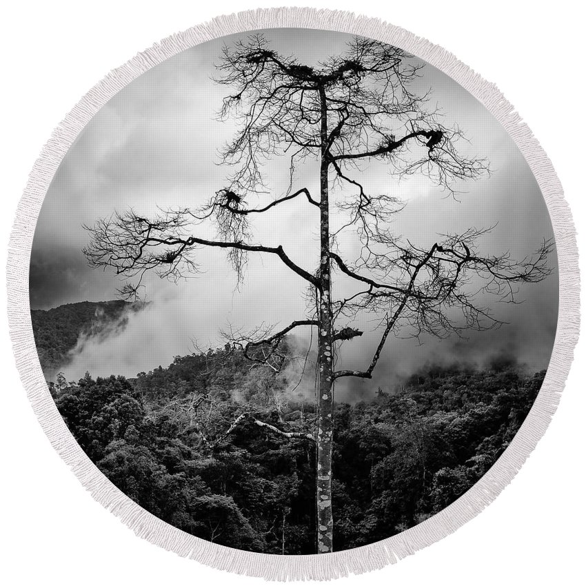 Cameron Highlands Round Beach Towel featuring the photograph Solitary Tree by Dave Bowman