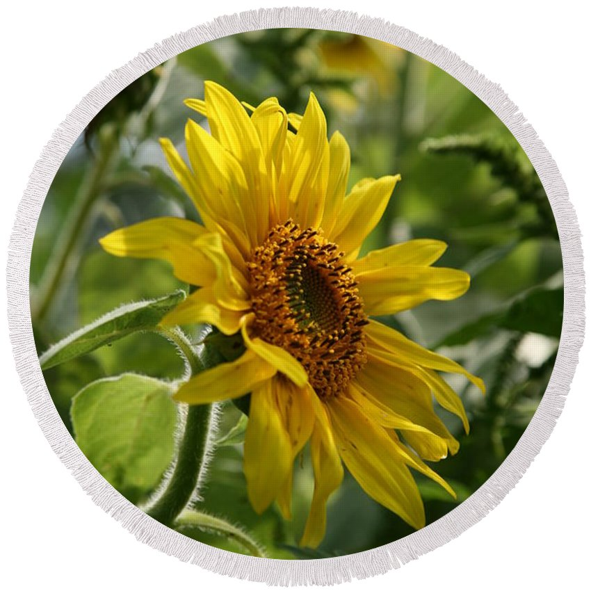 Sun Flower Round Beach Towel featuring the photograph Soulshine No.2 by Neal Eslinger
