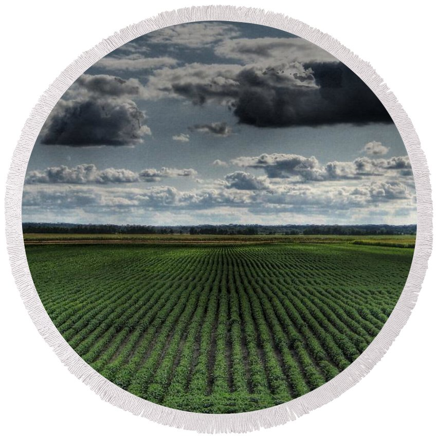 Soy Bean Round Beach Towel featuring the photograph Soy Beans by Jane Linders