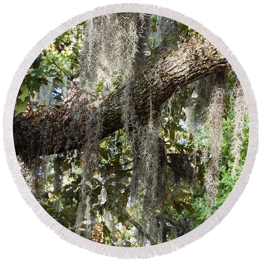 Spanish Moss Tree Trees Louisiana Purchase Gardens And Zoo Monroe Nature Round Beach Towel featuring the photograph Spanish Moss by Bob Phillips