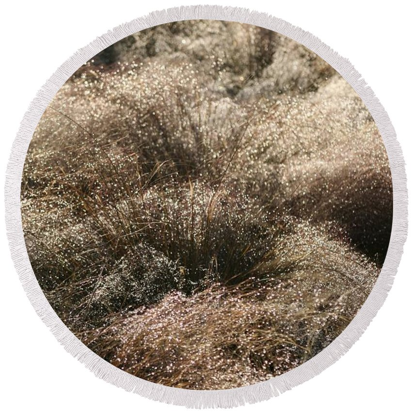 Grasses Round Beach Towel featuring the photograph Sparkling Grasses by Nadine Rippelmeyer