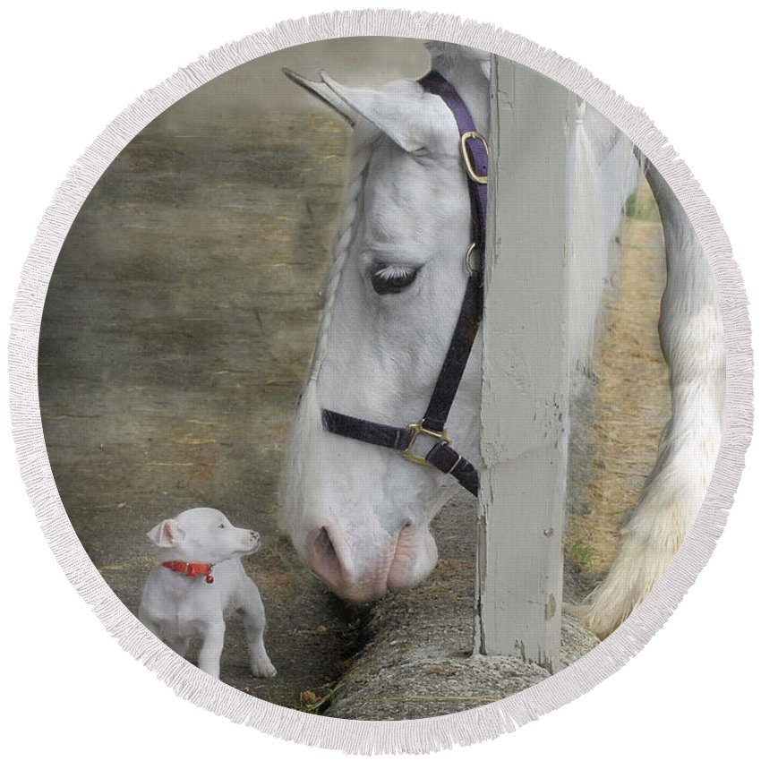 Horses Round Beach Towel featuring the photograph Sparky And Sterling Silvia by Fran J Scott