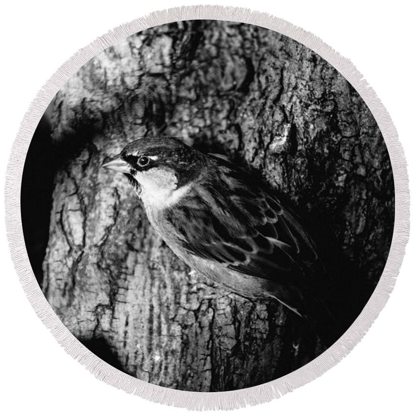 Black And White Round Beach Towel featuring the photograph Sparrow On A Tree by Pati Photography