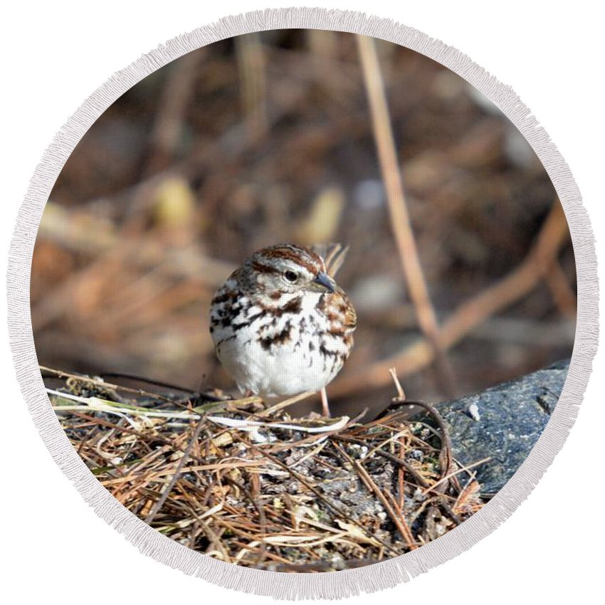 Song Sparrow Round Beach Towel featuring the photograph Sparrow by Thomas Phillips