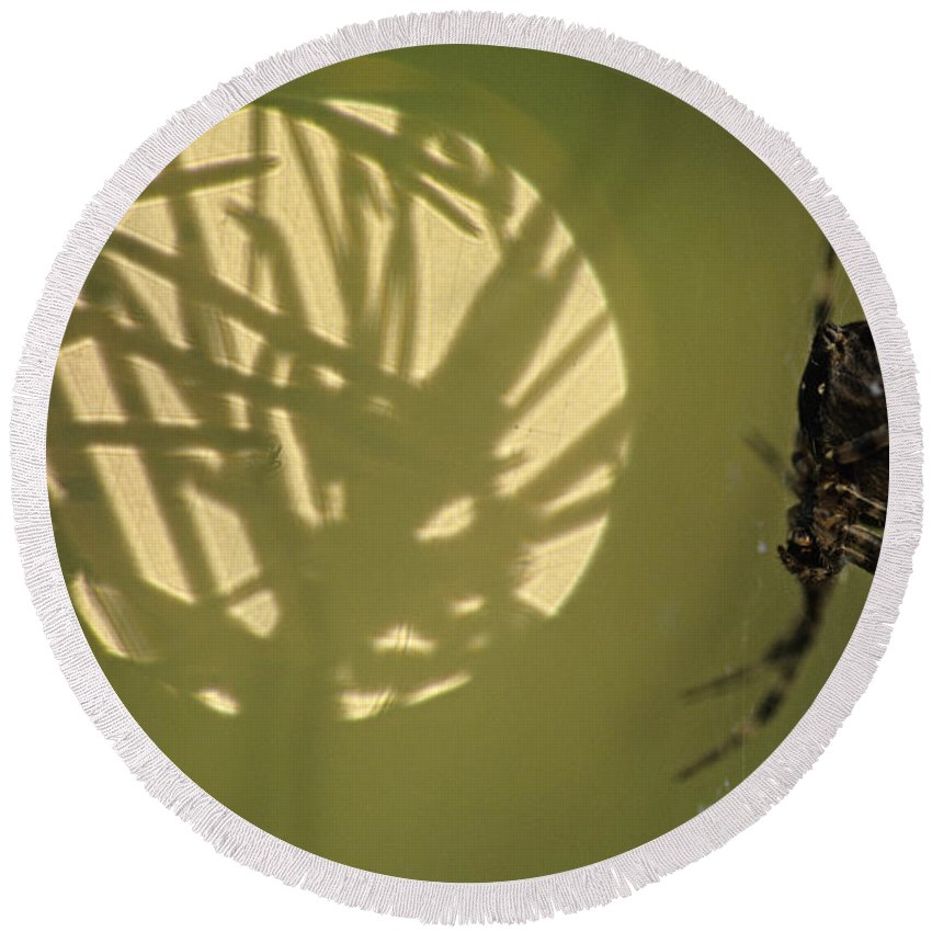 Nature Round Beach Towel featuring the photograph Spider And Sunlight by Jim Corwin
