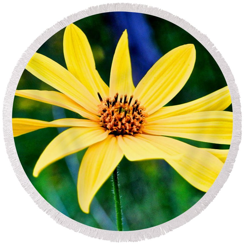 Spider Round Beach Towel featuring the photograph Spider Flower by Frozen in Time Fine Art Photography
