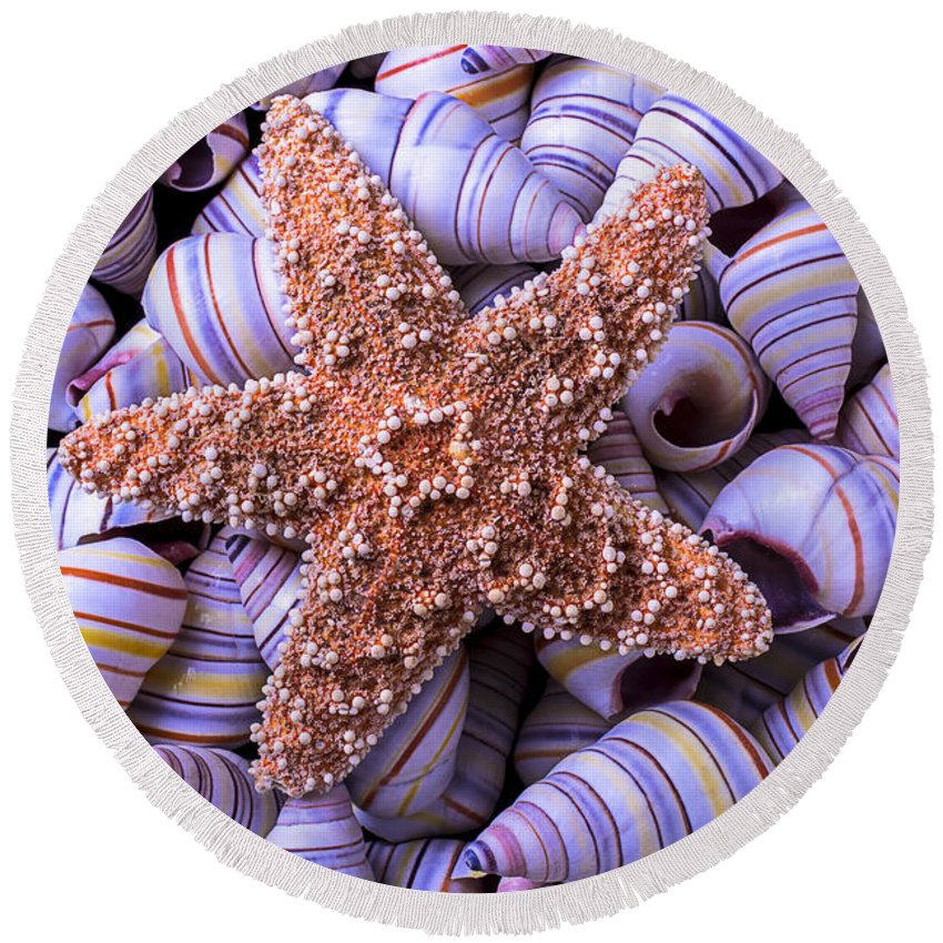 Spiral Round Beach Towel featuring the photograph Spiral Shells And Starfish by Garry Gay