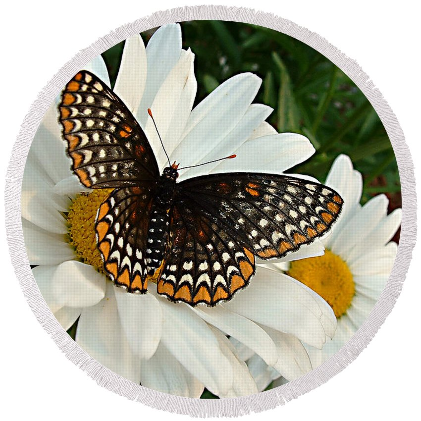 Big Butterfly Round Beach Towel featuring the photograph Spotted Butterfly by Tanya Hamell