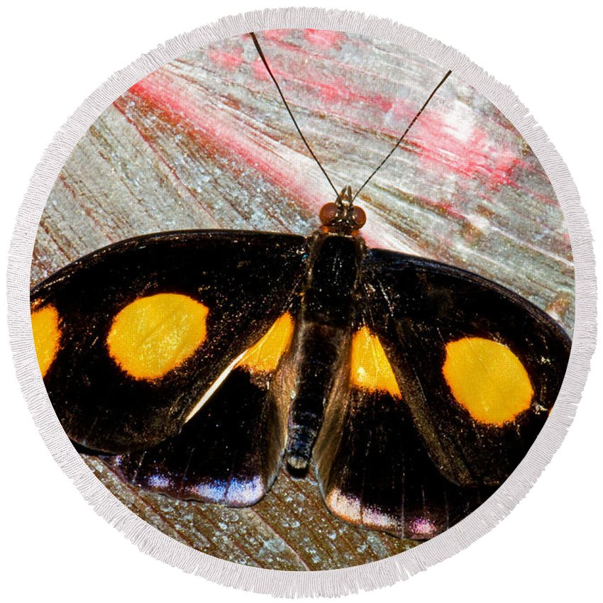 Nature Round Beach Towel featuring the photograph Spotted Grecian Shoemaker Butterfly by Millard H. Sharp