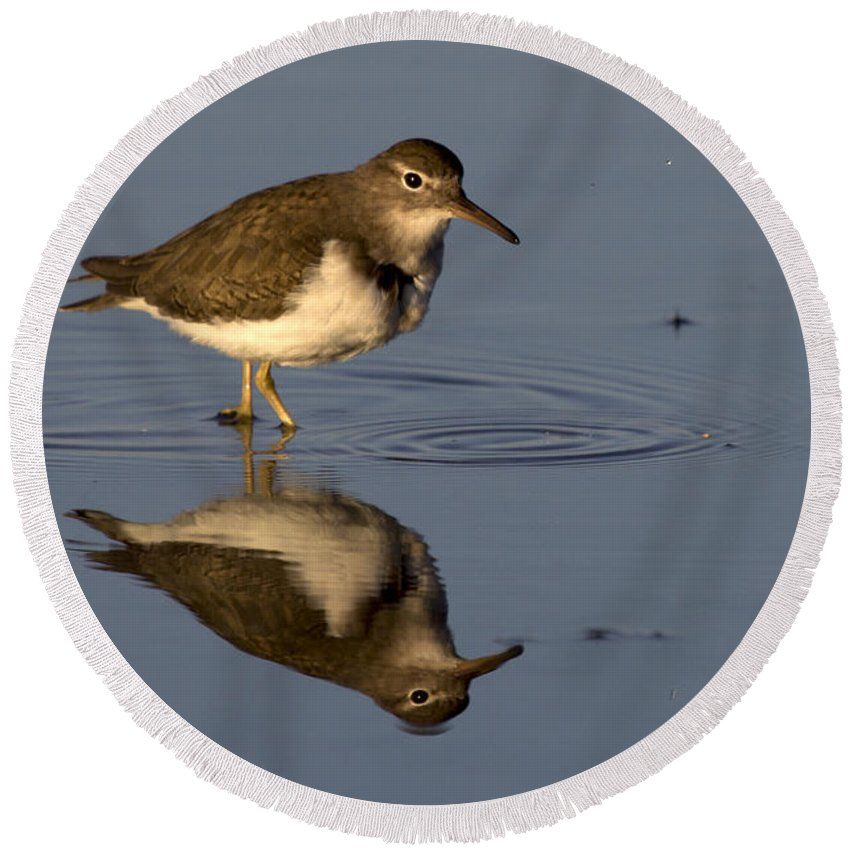 Spotted Sandpiper Round Beach Towel featuring the photograph Spotted Sandpiper Reflection by Meg Rousher