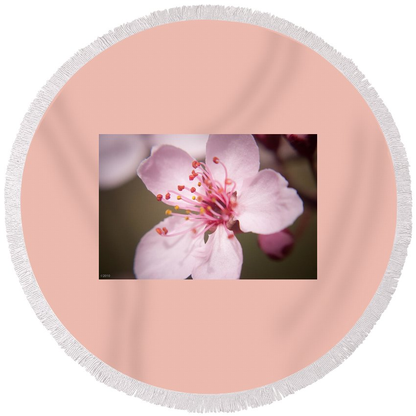 Flowers Round Beach Towel featuring the photograph Spring Blooms 6697 by Timothy Bischoff
