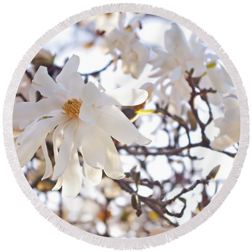 Magnolia Stellata Round Beach Towel featuring the photograph Spring Flowers by Sharon Popek