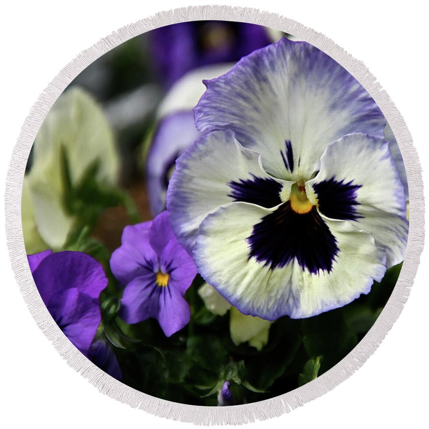 Pansy Round Beach Towel featuring the photograph Spring Pansy Flower by Ed Riche