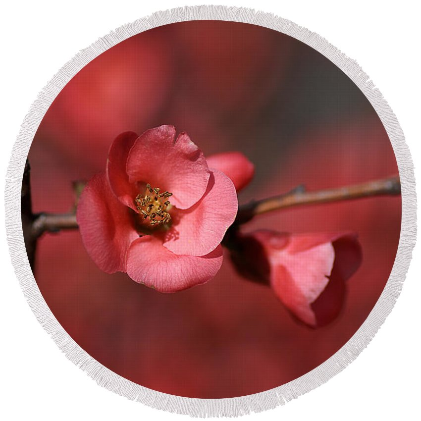 Red Round Beach Towel featuring the photograph Spring Richness - Flowering Quince by Joy Watson