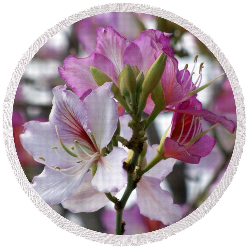 Diana Graves Photography Round Beach Towel featuring the photograph Spring Tree Blossoms by K D Graves